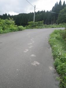 ヒグマの足跡。一番近い民家まで100m。